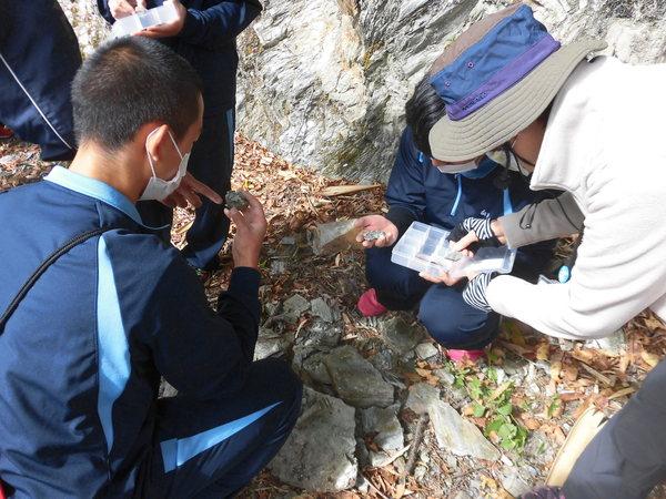 露頭での岩石の観察と採取