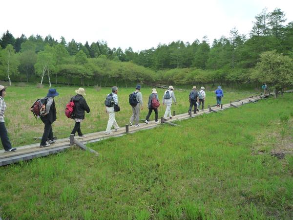 入笠湿原を散策