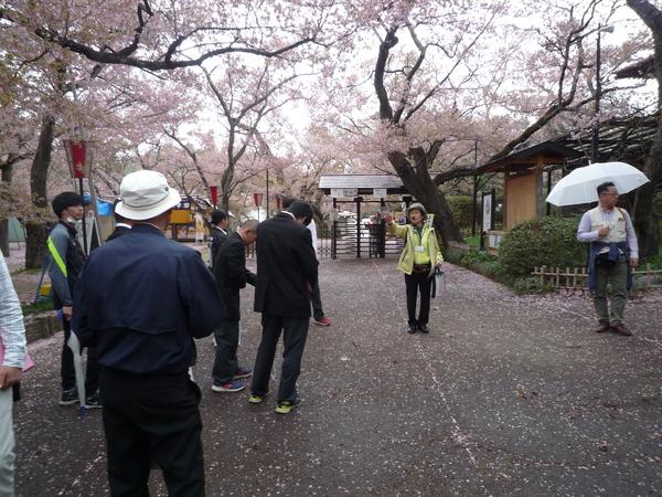桜吹雪のきれいな高遠城址公園で、実際のガイドを体験しました