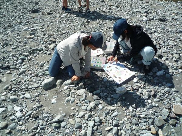 石の特徴をよく観察しながら拾います